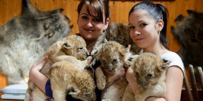 gyöngyösi állatkert_kész